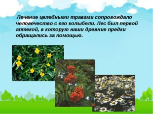 Лечение целебными травами сопровождало человечество с его колыбели. Лес был