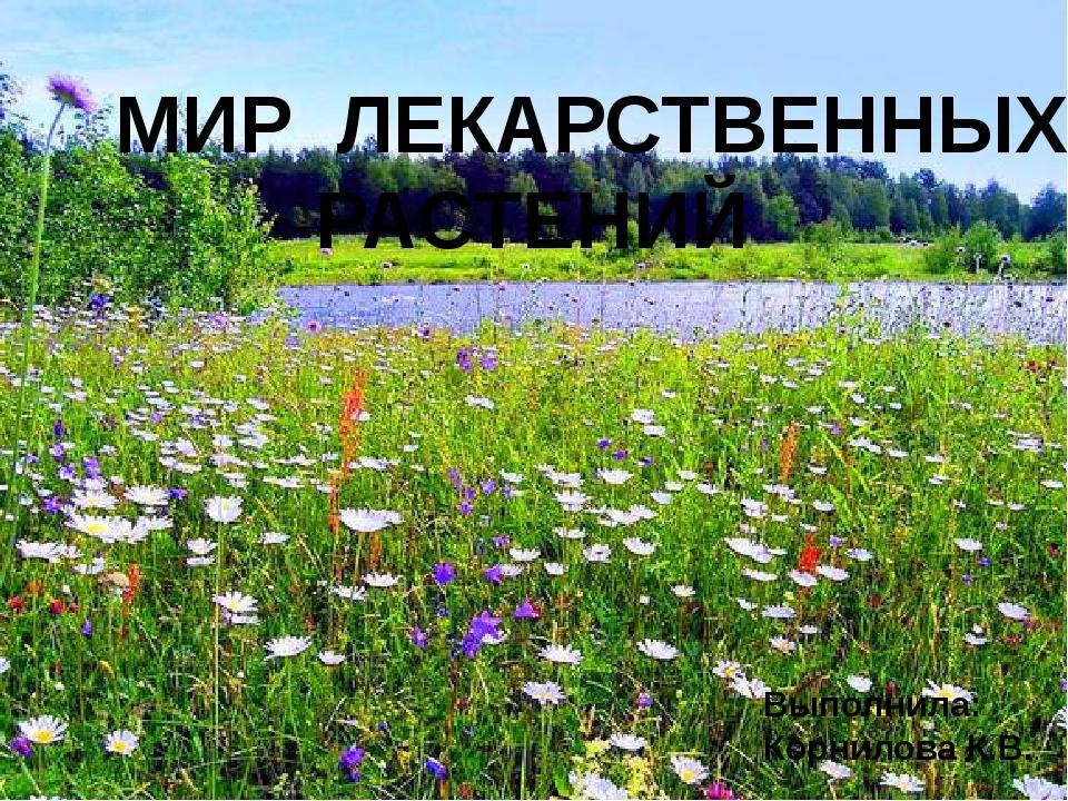 МИР ЛЕКАРСТВЕННЫХ РАСТЕНИЙ Выполнила: Корнилова К.В..