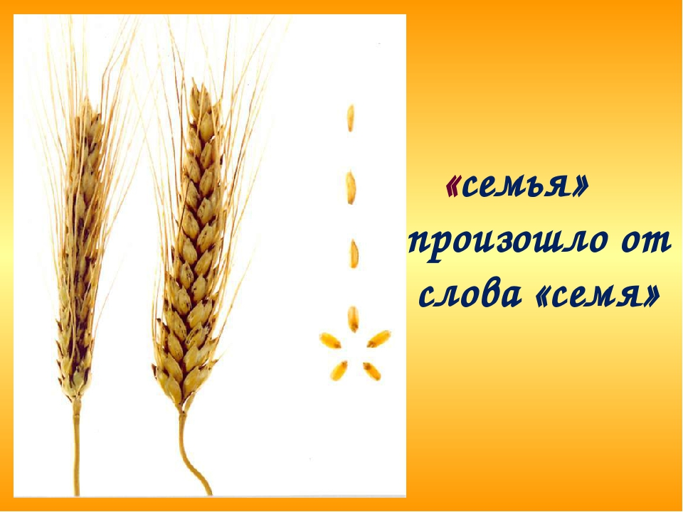 «семья» произошло от слова «семя»