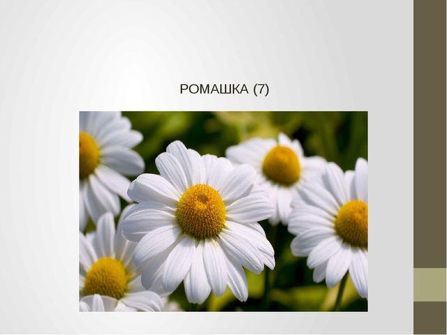 РОМАШКА (7)