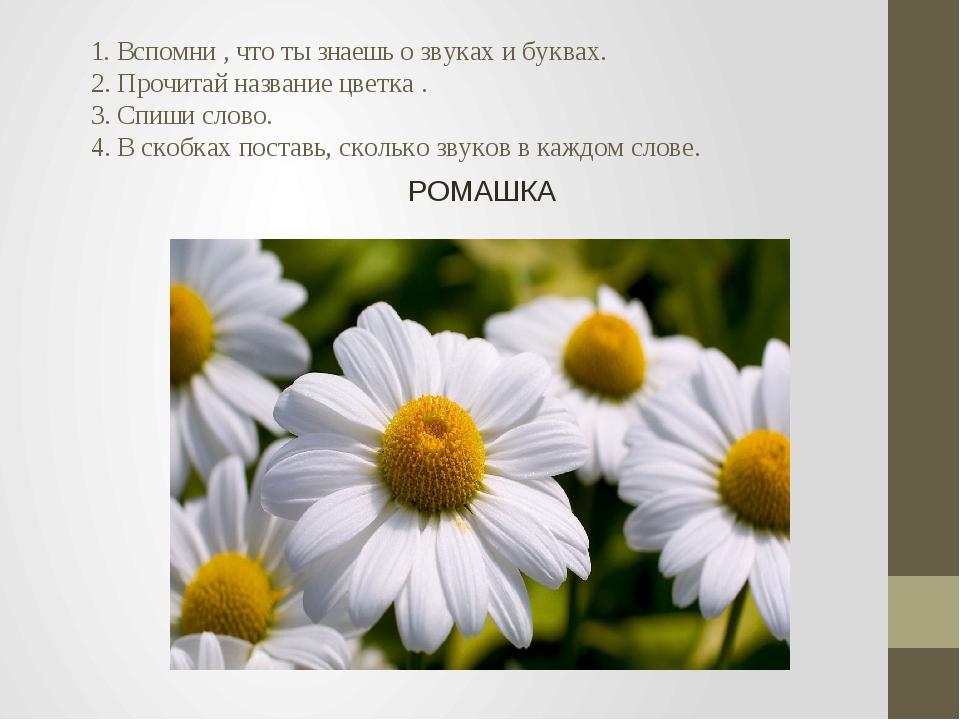 1. Вспомни , что ты знаешь о звуках и буквах. 2. Прочитай название цветка ....