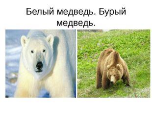 Белый медведь. Бурый медведь.