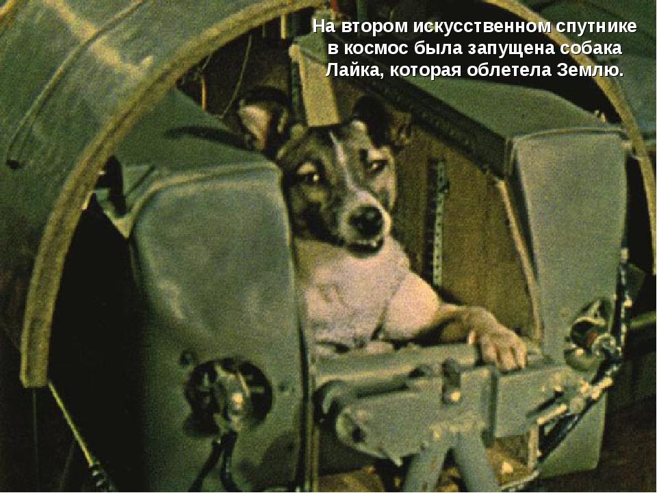 На втором искусственном спутнике в космос была запущена собака Лайка, которая...