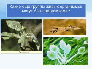 Какие ещё группы живых организмов могут быть паразитами?