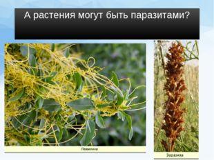 А растения могут быть паразитами?