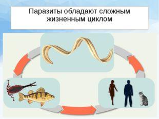 Паразиты обладают сложным жизненным циклом
