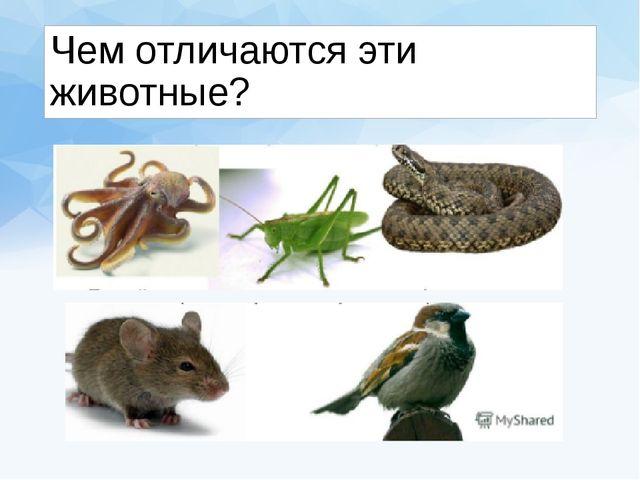 Чем отличаются эти животные?