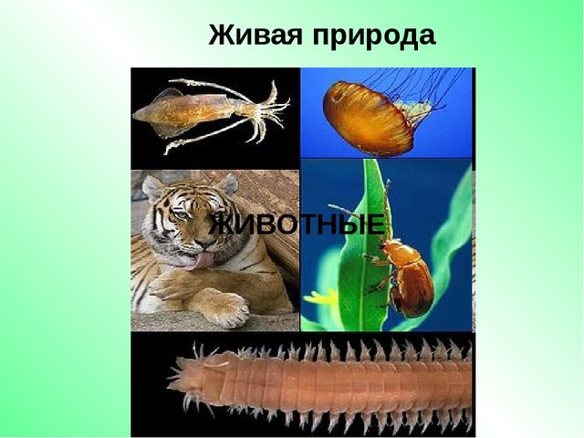 Живая природа ЖИВОТНЫЕ