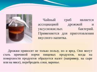 Чайный гриб является ассоциацией дрожжей и уксуснокислых бактерий. Применяетс