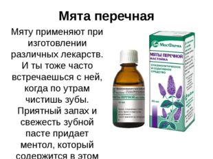 Мята перечная Мяту применяют при изготовлении различных лекарств. И ты тоже ч