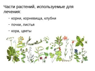 Части растений, используемые для лечения: корни, корневища, клубни почки, лис