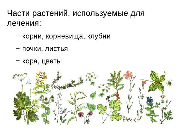 Части растений, используемые для лечения: корни, корневища, клубни почки, лис...