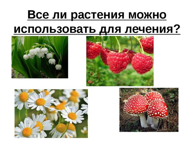 Все ли растения можно использовать для лечения?