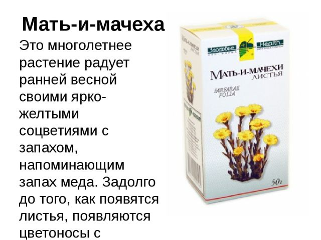 Мать-и-мачеха Это многолетнее растение радует ранней весной своими ярко-желты...