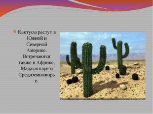 Кактусы растут в Южной и Северной Америке. Встречаются также в Африке, Мадага