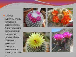 Цветут кактусы очень красиво и разнообразно. Они украшают подоконники во мног