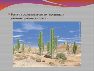 Растут в основном в степях, пустынях и влажных тропических лесах.