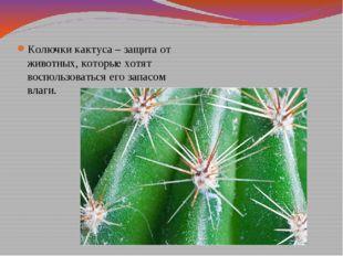 Колючки кактуса – защита от животных, которые хотят воспользоваться его запас