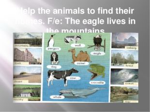 Help the animals to find their homes. F/e: The eagle lives in the mountains
