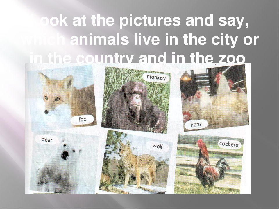 Look at the pictures and say, which animals live in the city or in the countr...