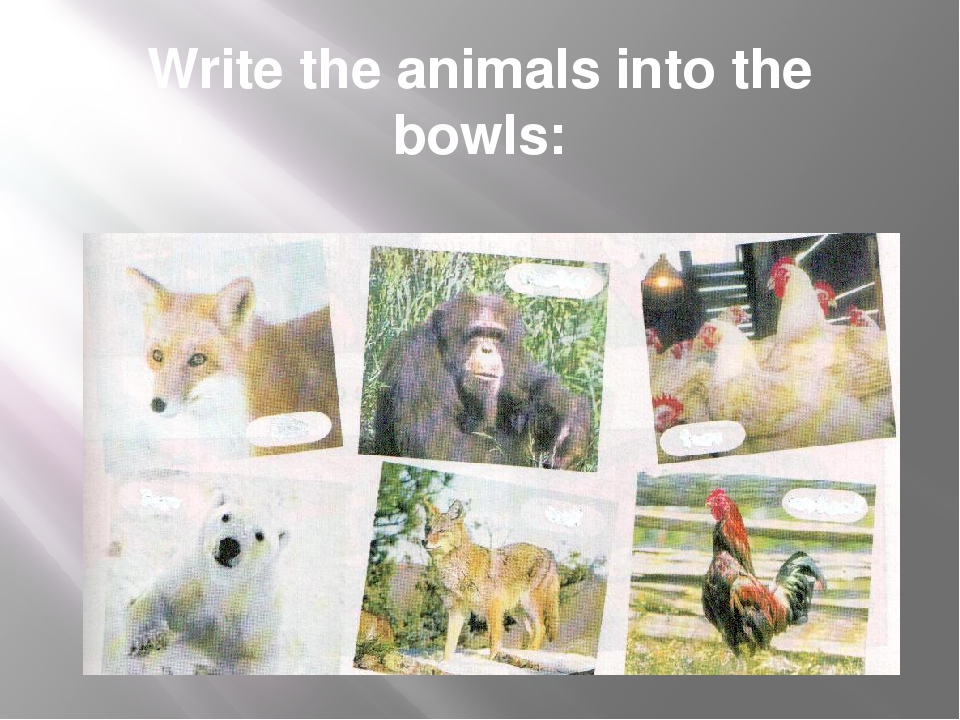 Write the animals into the bowls: