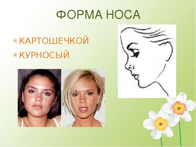 ФОРМА НОСА КАРТОШЕЧКОЙ КУРНОСЫЙ