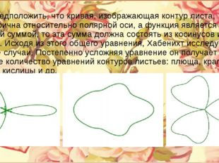 Если предположить, что кривая, изображающая контур листа, симметрична относит