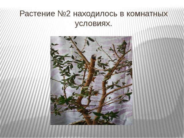 Растение №2 находилось в комнатных условиях.