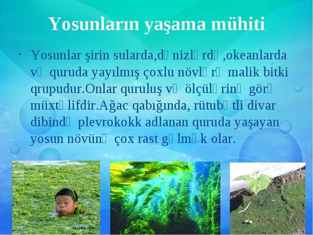 Yosunların yaşama mühiti Yosunlar şirin sularda,dənizlərdə,okeanlarda və quru...