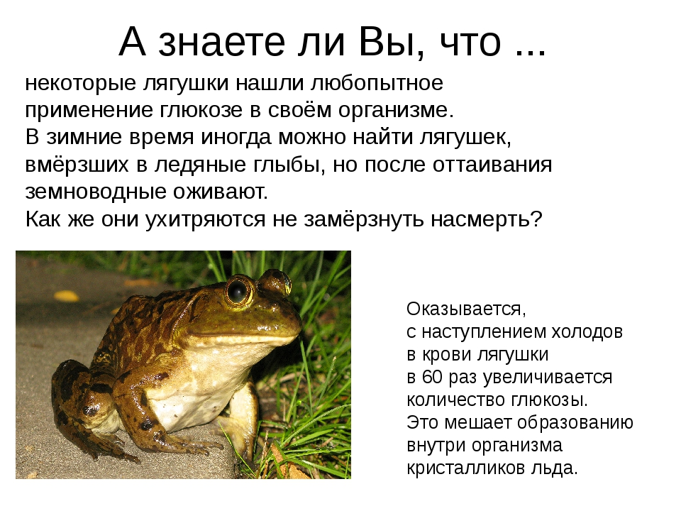 некоторые лягушки нашли любопытное применение глюкозе в своём организме. В зи...