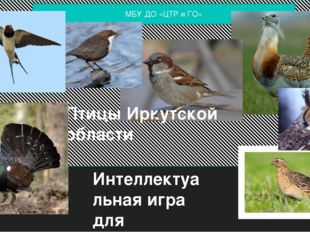 МБУ ДО «ЦТР и ГО» Птицы Иркутской области Интеллектуальная игра для супермлад
