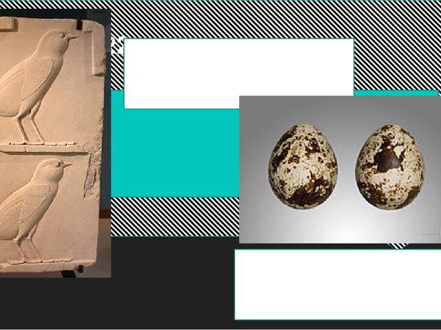 Вопрос 22 Так выглядят изображения детенышей этих птиц в искусстве Древнего...