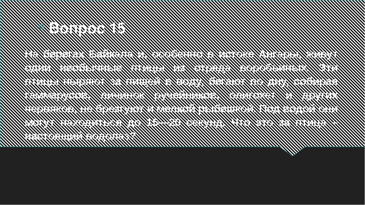 На берегах Байкала и, особенно в истоке Ангары, живут одни необычные птицы из...