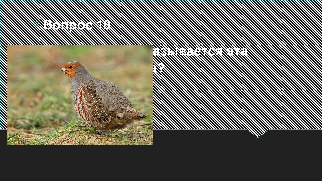 Как называется эта птица? Вопрос 18