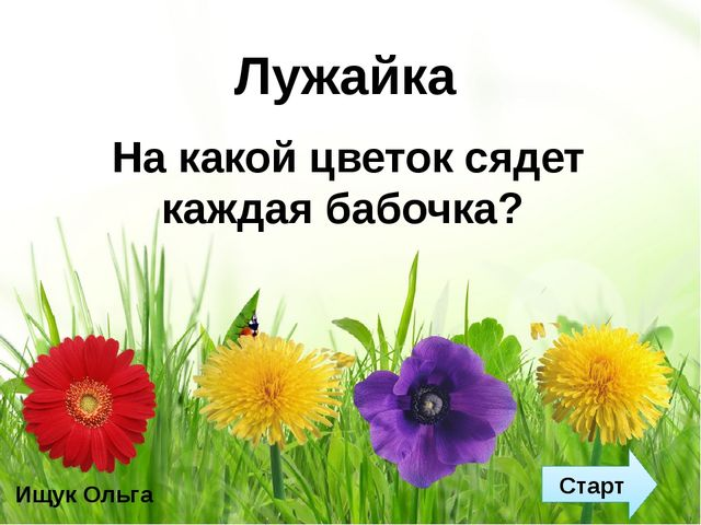 Лужайка Старт На какой цветок сядет каждая бабочка? Ищук Ольга