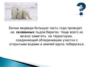 Белые медведи большую часть года проводят на скованных льдом берегах. Чаще в