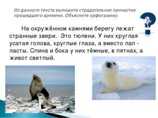 На окружённом камнями берегу лежат странные звери. Это тюлени. У них круглая