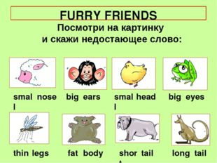 FURRY FRIENDS small big short nose fat ears eyes long thin big head legs smal