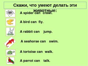 A spider can fly. crawl. jump. swim. A seahorse can A bird can A rabbit can