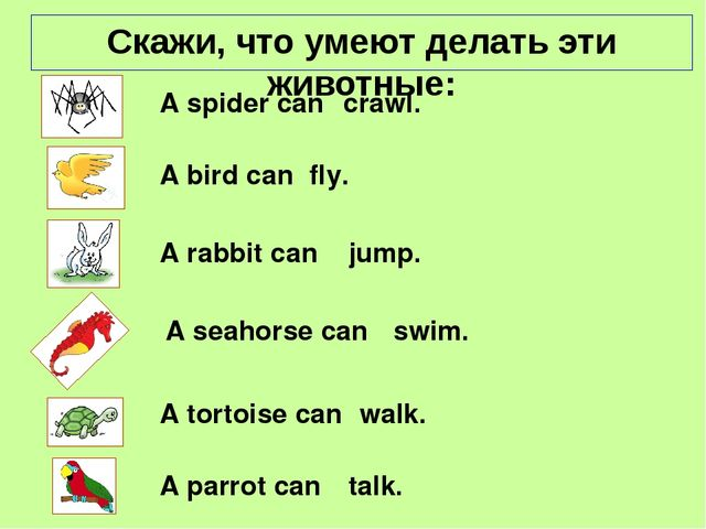 A spider can fly. crawl. jump. swim. A seahorse can A bird can A rabbit can...