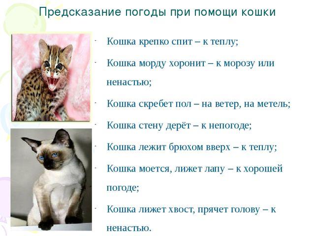 По коту гдз