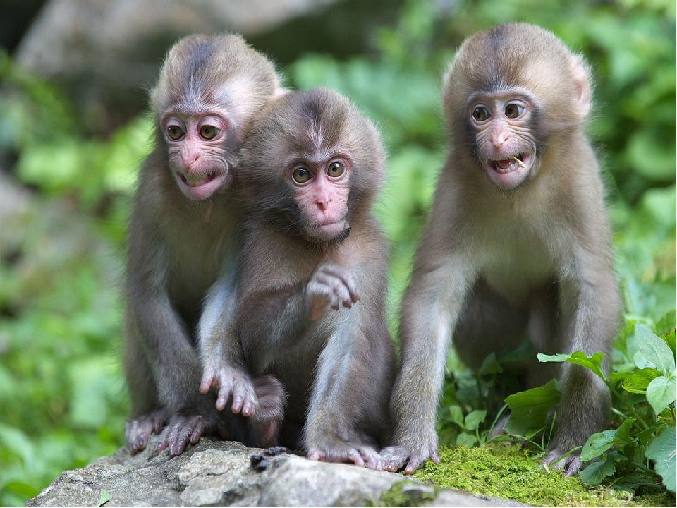Израильскому новому, картинка с тремя обезьянами