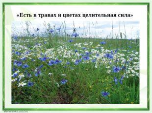 «Есть в травах и цветах целительная сила»
