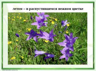 летом – в распустившемся нежном цветке