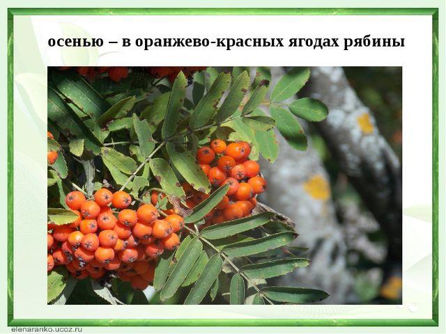 осенью – в оранжево-красных ягодах рябины
