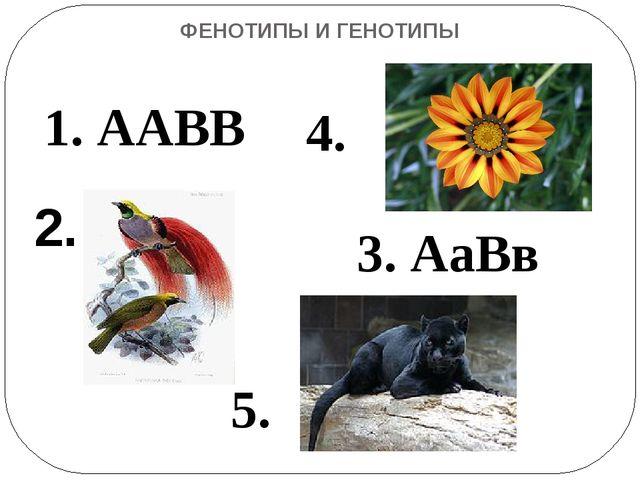 ФЕНОТИПЫ И ГЕНОТИПЫ 2. 1. ААВВ 3. АаВв 4. 5.