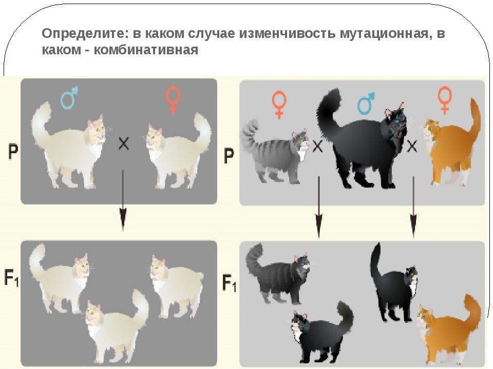 Определите: в каком случае изменчивость мутационная, в каком - комбинативная