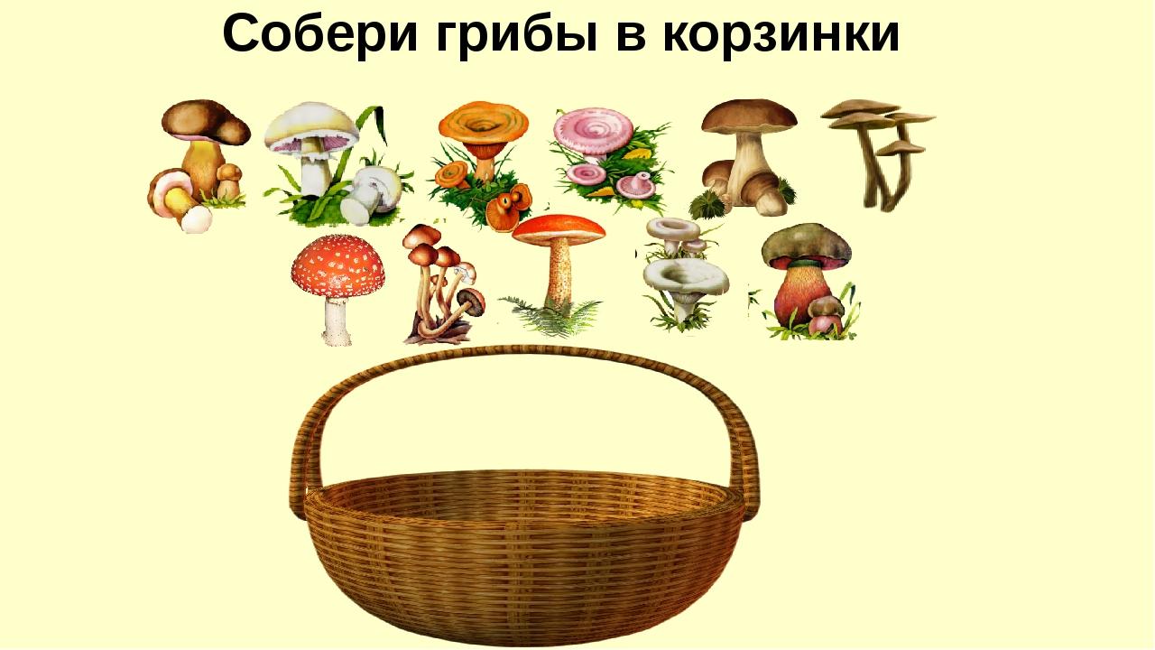 Картинки для детей по теме грибы
