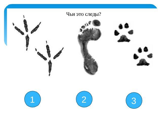 1 2 3 Чьи это следы?