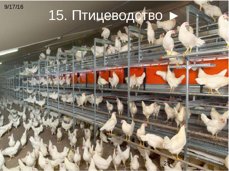 Все для выращивания птиц 674